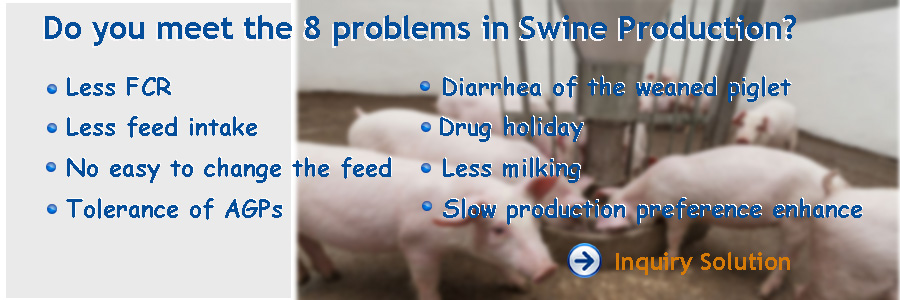 feed additives for swine Feed additives are non-nutritive feed ingredients that are not required by swine in the absence of feed additives in the diet, no deficiency symptoms will result they may, however, enhance production and profitability under the right circumstances.